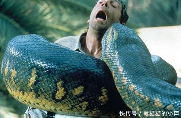 泰坦蟒和剑齿虎争斗,谁会是最后的赢家!看史诗级别动物世界