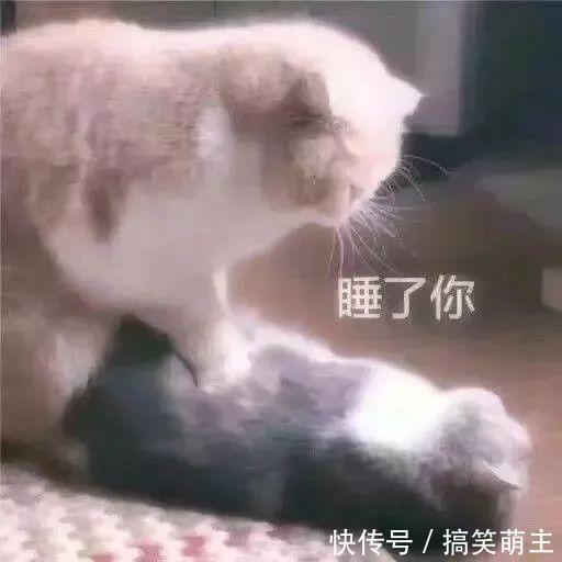卖萌表情表情:你这个小可爱,电你喔熊猫猫咪图v表情图片
