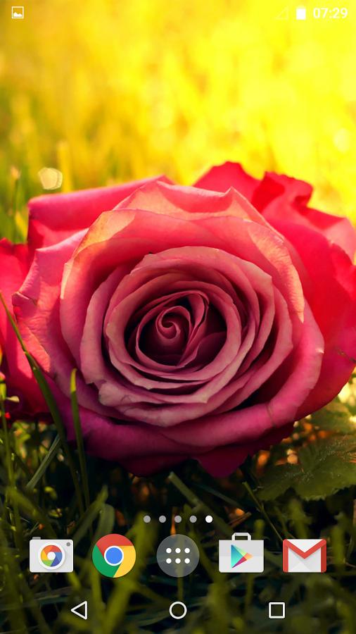 这些玫瑰图像看起来如此真实,你几乎可以感觉到自己的气味,闻起来最