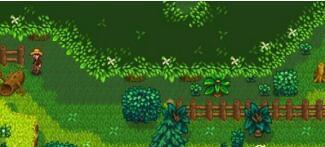 星露谷物语stardew valley神秘森林怎么去