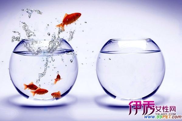 金鱼缸_360百科