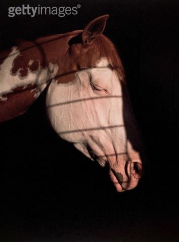 马睡觉的时候是什么状态?
