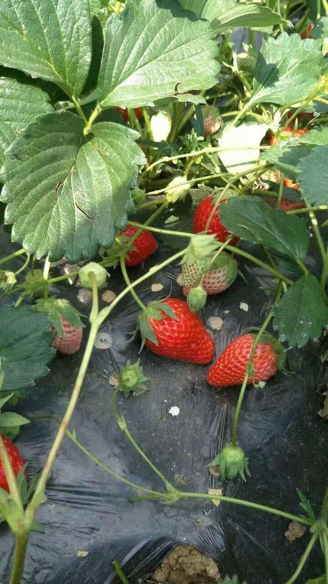 农药残留最高的水果,好多人不知道,依旧热衷于边摘边吃! -  - 真光 的博客