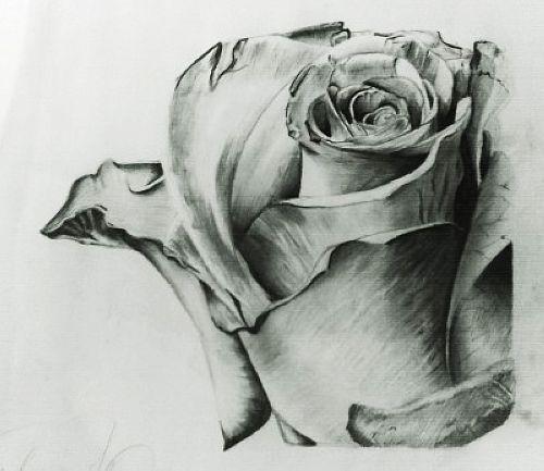 求助:怎样画素描玫瑰花