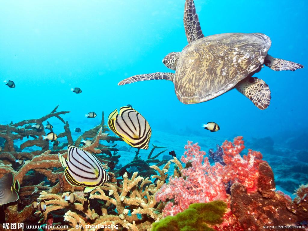 海底世界 海底世界简笔画 青岛海底世界 齐河海底世界