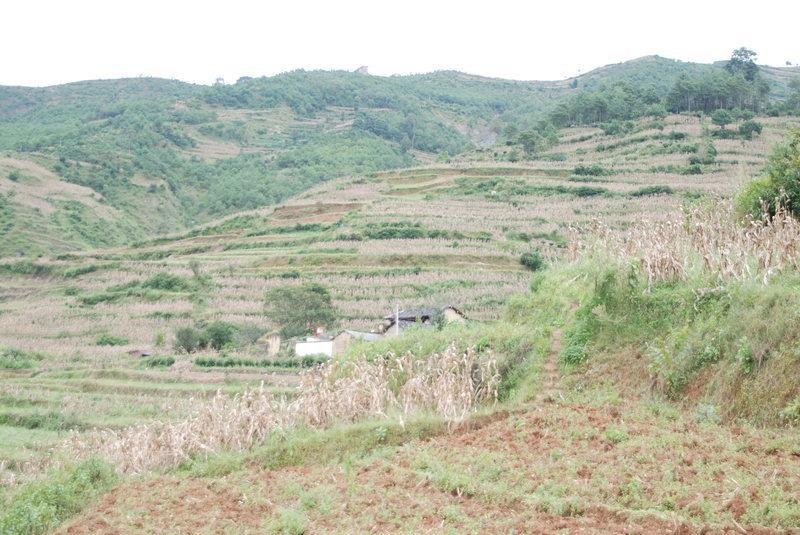 壁纸 成片种植 风景 植物 种植基地 桌面 自然风景 800_535