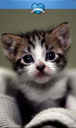 可爱萌猫高清壁纸_360手机助手