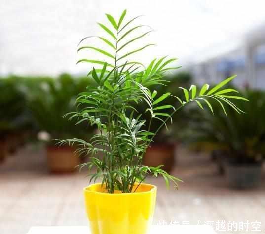 除了绿萝你还可以选择它,一种特别适合室内养的绿植