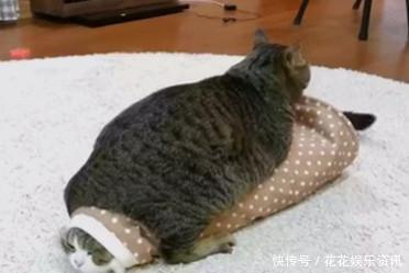 这只胖猫简直表情一个行走1的网友皮肤表情包啊,就是:赶图片