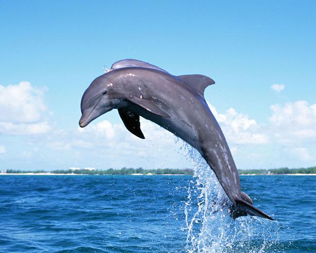 大鱼海豚折纸教程图解