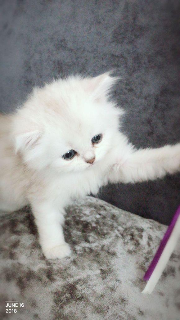 看到狗市附近的猫咪表情包大过图片qq,想买一只农村,路过猫妈在图片
