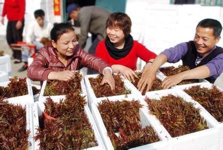 春天最让人心神向往的一道美味,给海鲜都不换,你吃过吗 - 周公乐 - xinhua8848 的博客