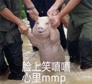 地震被拖得猪搞笑表情包