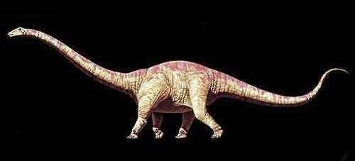 动物 恐龙 500_227