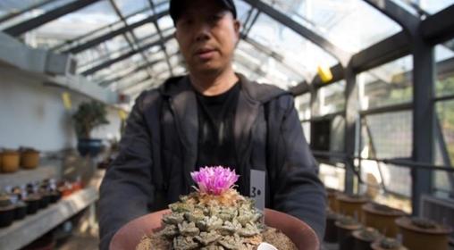 """杭州上百岁龟甲牡丹开花 被称""""植物中的大熊猫"""""""