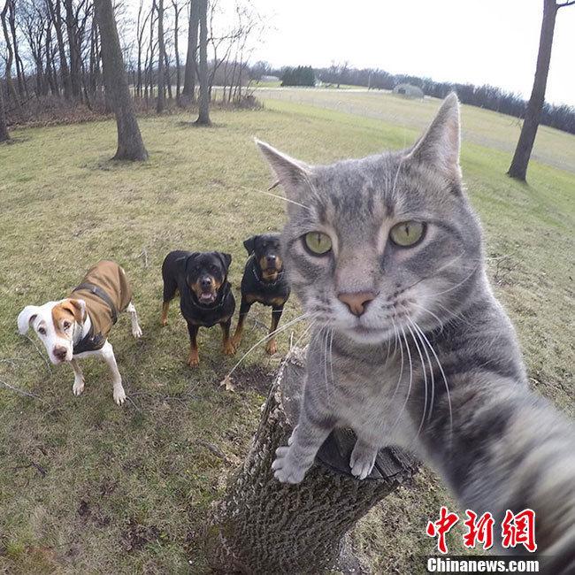 2016这些呆萌动物戳中你的笑点 - 周公乐 - xinhua8848 的博客