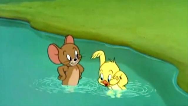 小鸭子太完蛋了,还不会游泳,认杰瑞当老师呢