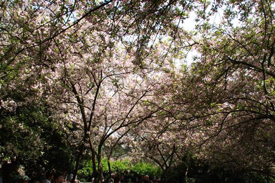 南山植物园根据功能要求,分为观赏植物园风景林区,专类观赏植物园区