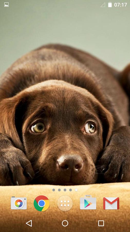 准备很高兴与最惊人的小狗的照片和背景甜蜜的狗!一个美丽的收集十的背景狗就是在这里 - 我们为您带来一个漂亮的犬种和可爱的小狗,比如哈士奇小狗,金毛小狗,小狗法国斗牛犬等可爱的动物为您的手机和平板电脑!发现所有的好和非常甜蜜的狗,并穿上你最喜欢的小狗无论你走到哪里!可爱的狗甜HD壁纸动物和图片在那里为所有谁认为狗是人类最好的朋友的人!获取小狗这个美丽的壁纸和宠爱的屏幕,饰以微小浮动的心和星星可爱的狗的照片!每个人都会喜欢你的新的背景 - 甜蜜的小狗,如阿尔萨斯犬,拉布拉多犬,狩猎