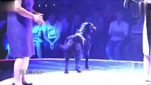 导盲犬听到8年未见的主人喊它名字时, 狗狗的反应让全场感动落泪