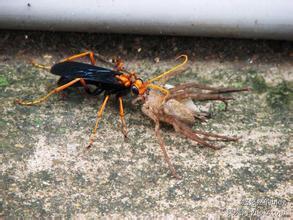 蛛蜂是样的视频,有图片_360v视频街舞动物大风车图片
