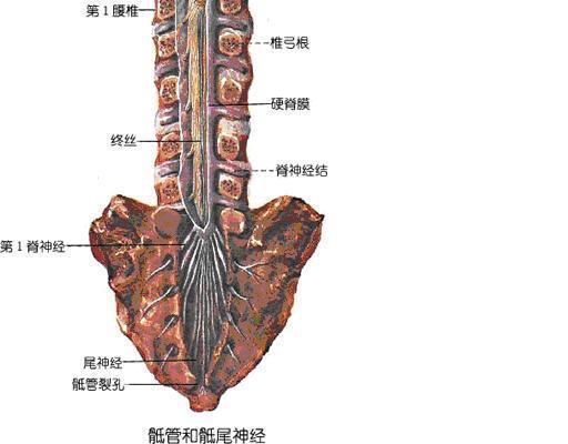 腰椎4到骶1椎间盘在那个位置