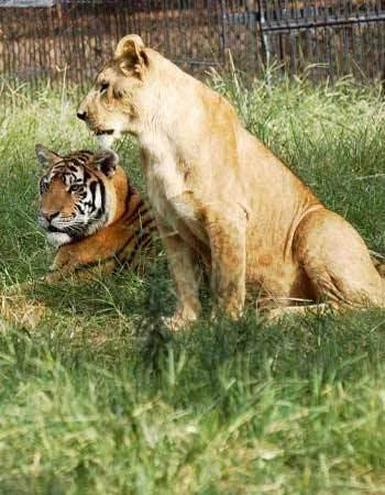 三峡森林野生动物世界是由宜昌三峡植物园与香港雄森熊虎集团合资兴建