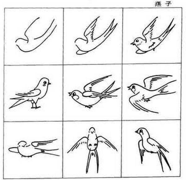 燕子的简笔画图片,还有燕子身上的黑白颜色