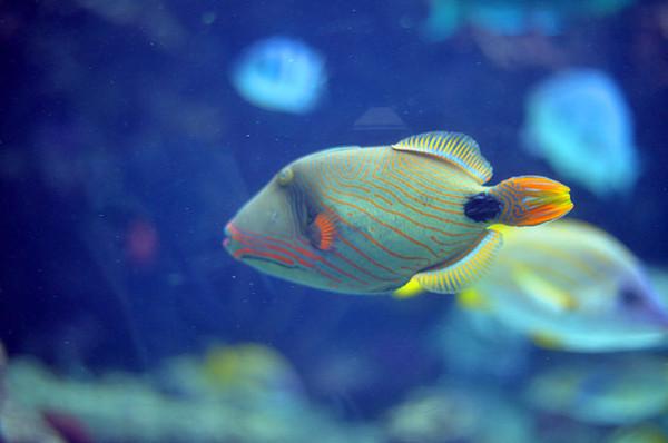 荧虾等难以人工繁殖的稀有海洋生物之外,还通过图片和解说,了解到深海