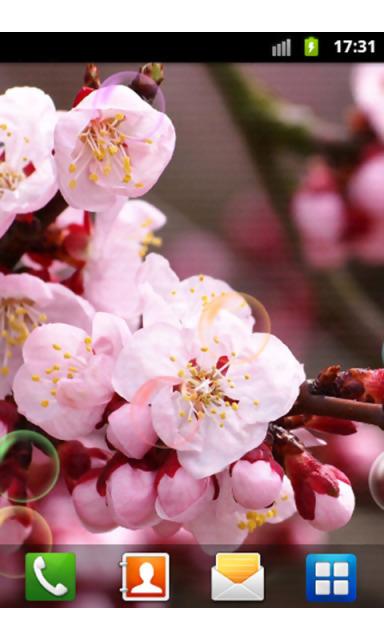 漂亮花朵动态壁纸下载
