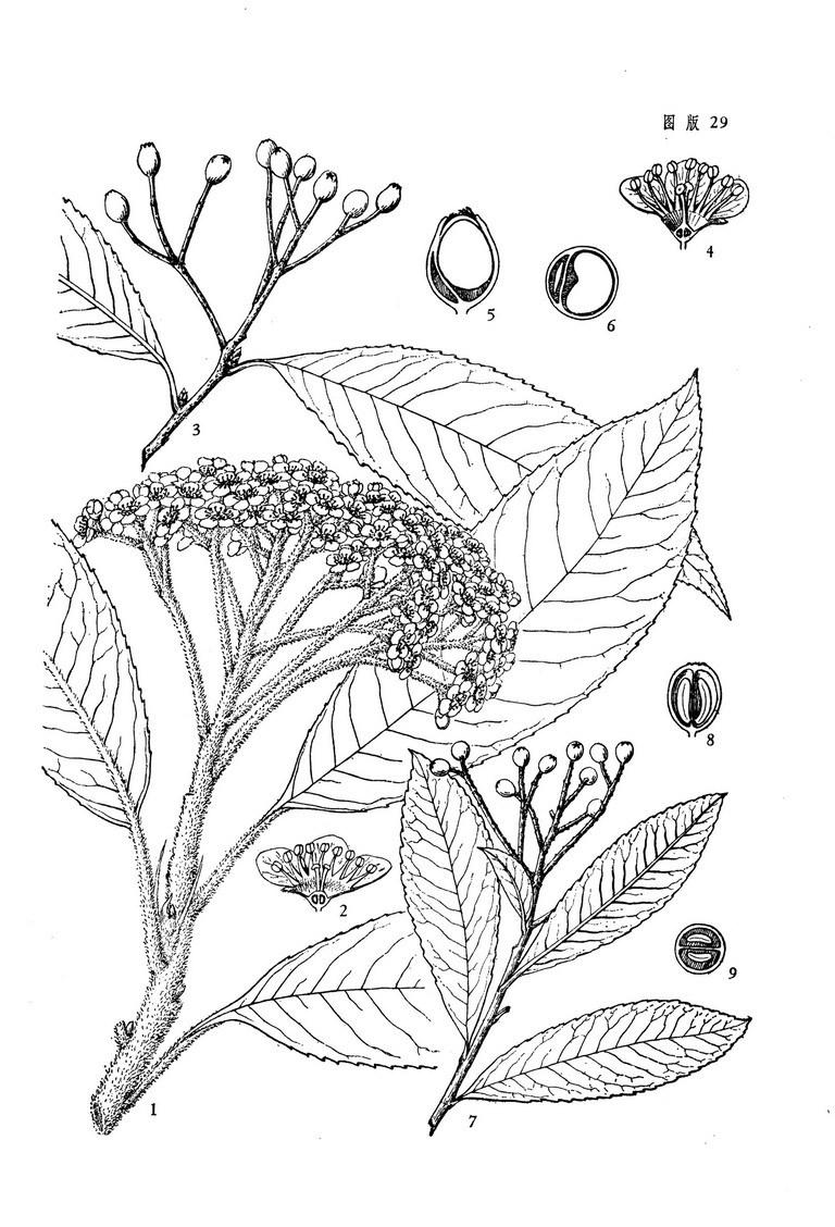 简笔画 手绘 线稿 768_1128 竖版 竖屏