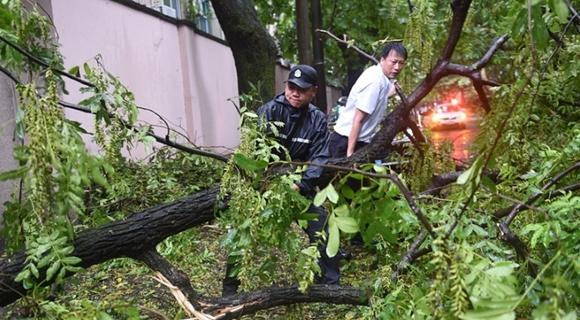 """台风""""摩羯""""登陆 杭州多处行道树折断"""