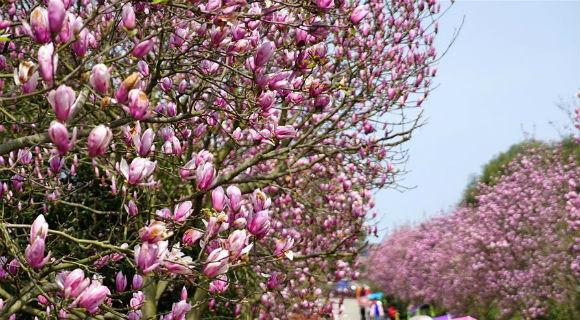 春到凤凰沟