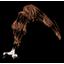 煮熟的黑蝙蝠翅膀.png