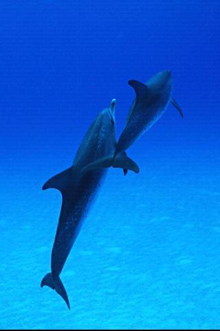 海豚高清壁纸_360手机助手