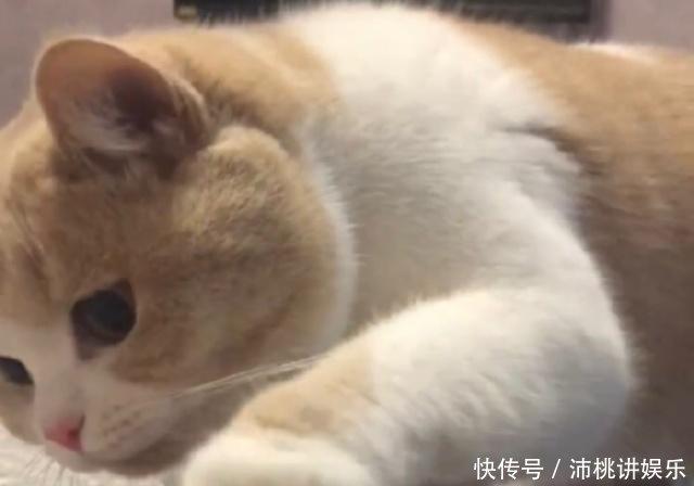 猫咪表情蜜桃精选爱我别走a猫咪v猫咪表情包图片