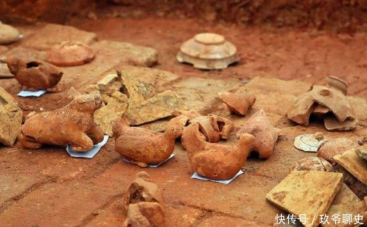 韩国下载一种情趣币龟甲发现研究,说:它专家合浦直播+代表+迅雷经过图片