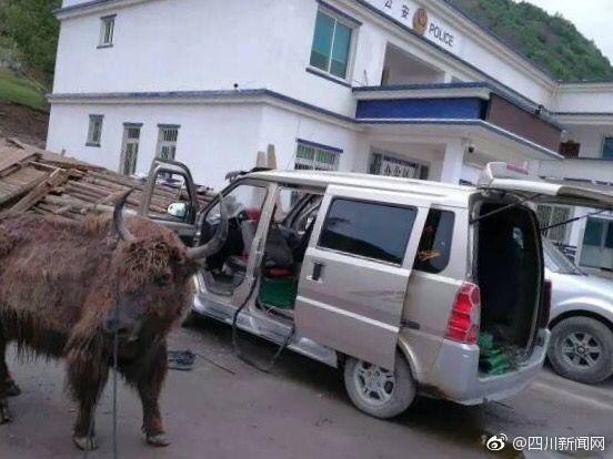 【转】北京时间     四川现盗牛贼 一辆面包车塞进两头牦牛 - 妙康居士 - 妙康居士~晴樵雪读的博客