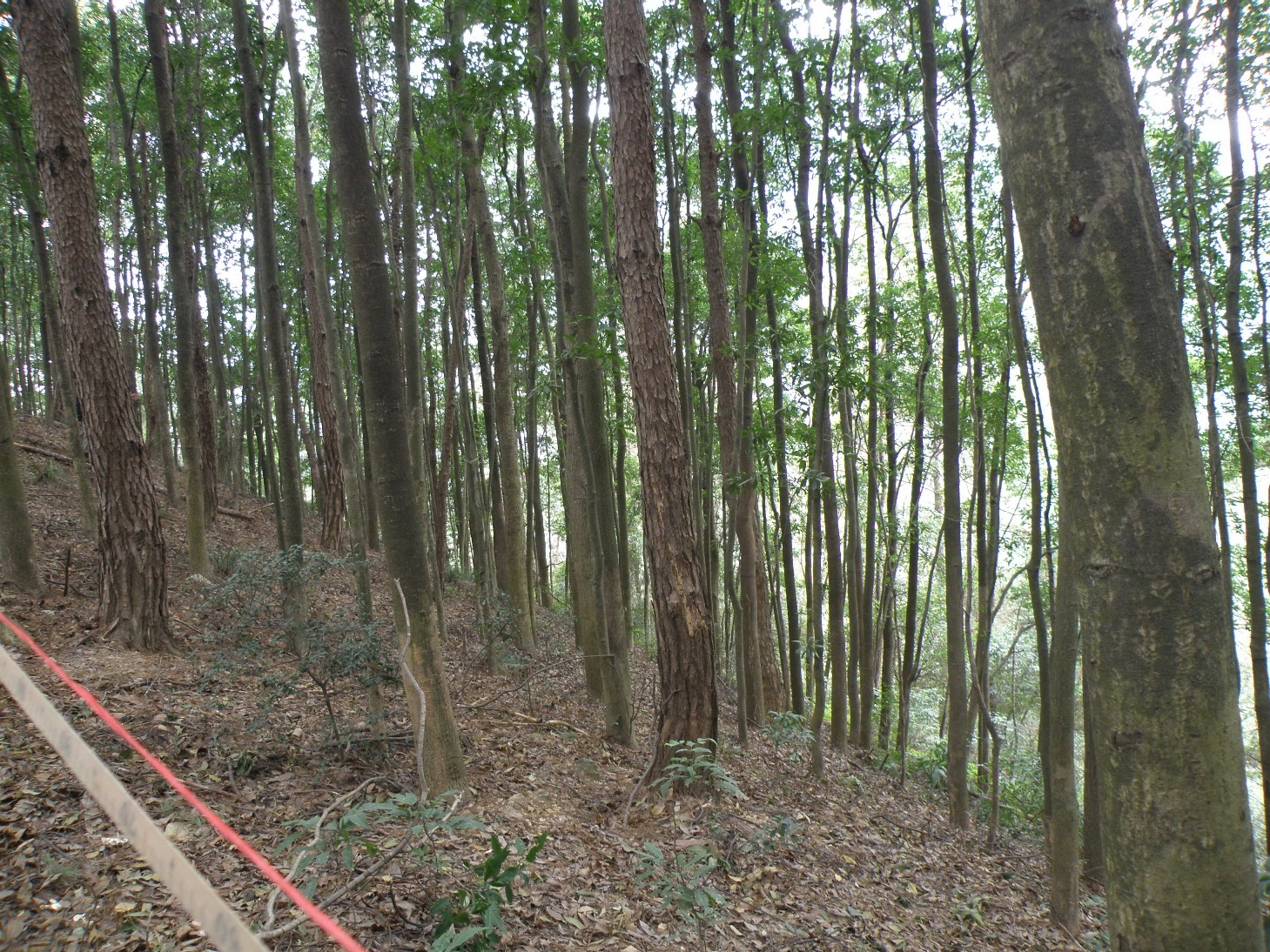 松树适合什么土壤