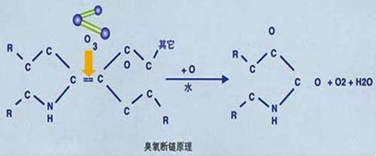 臭氧以氧原子的氧化作用破坏微生物膜的结构