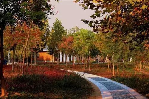 秋天的郑州西流湖景色美翻