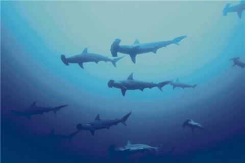 简单二年级动物图画大全鲨鱼大尾虎鲨