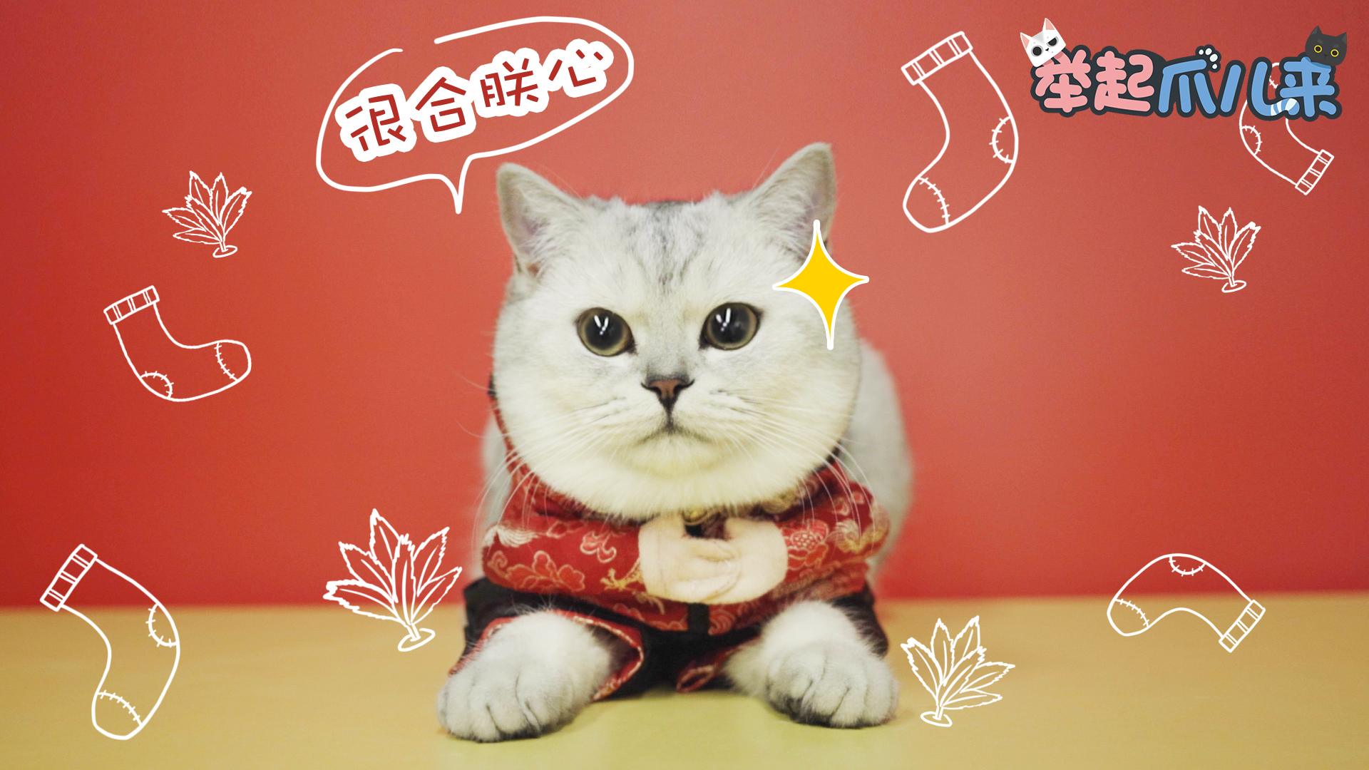 送给猫咪的新春礼物