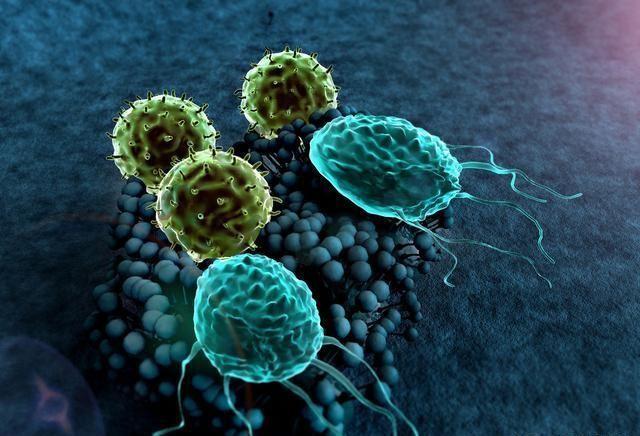 超级真菌概念股爆发,一文看懂超级细菌以及龙